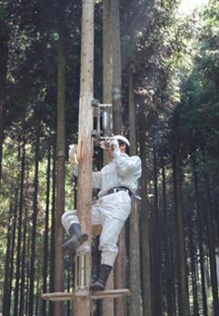 【特徴4】スピーカーに使用されている北山杉について