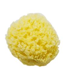 海綿スポンジ。サンゴ種の商品