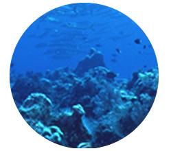 沖縄産、天然サンゴ化石粉末