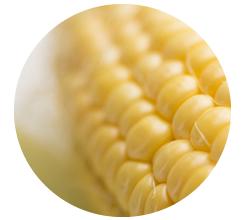 トウモロコシ由来のグルコサミン